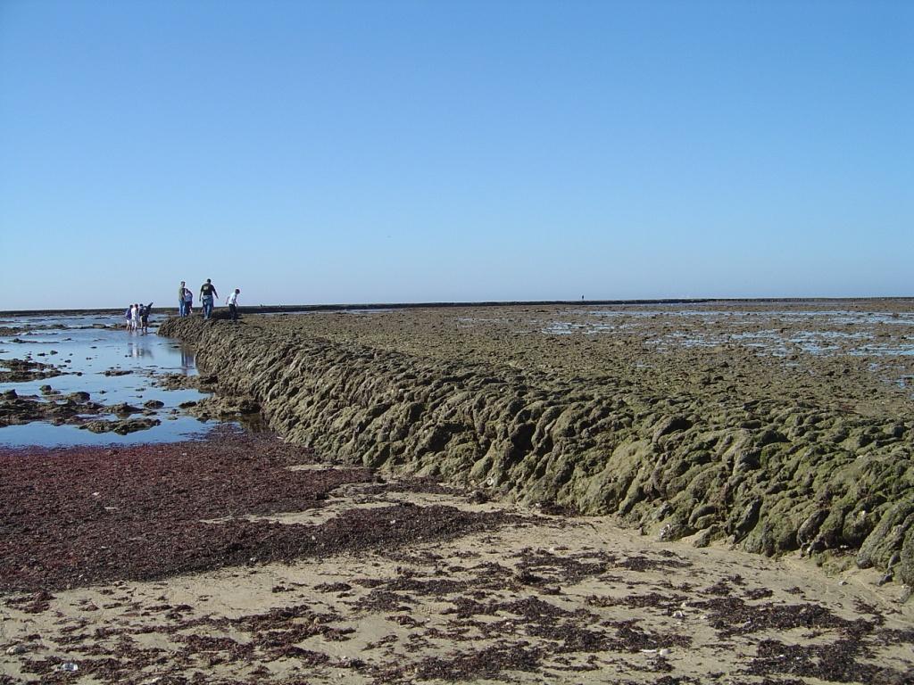 chipiona algas rojas